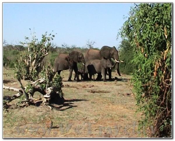 Botswana Chobe 043