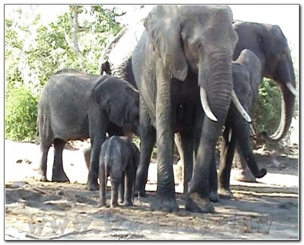 Botswana Chobe 054