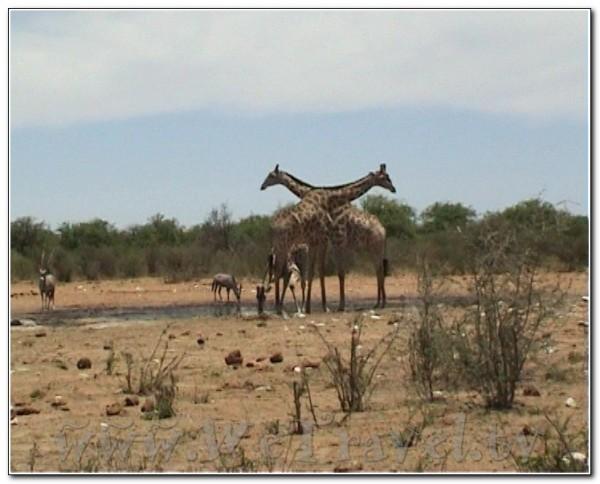Namibia Etosha 009