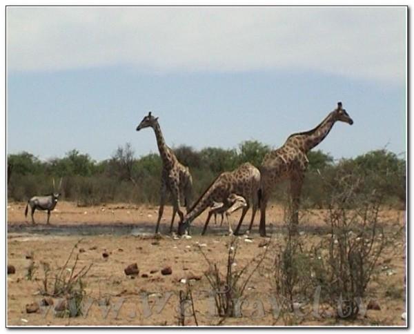 Namibia Etosha 012