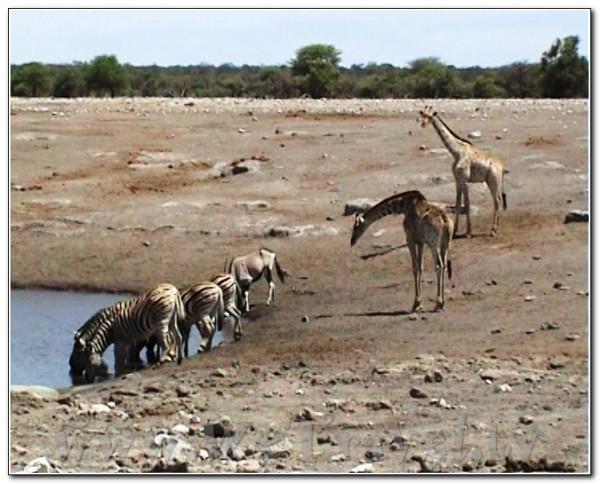 Namibia Etosha 030
