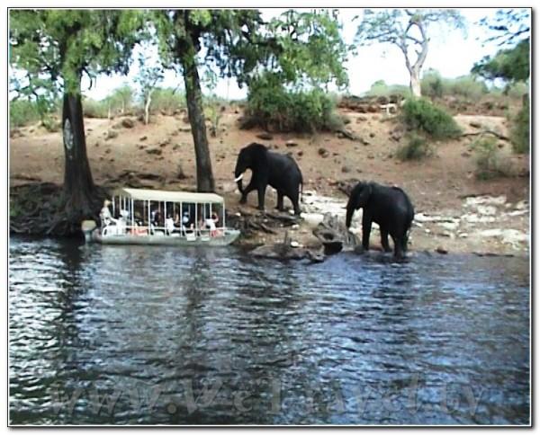 Botswana Chobe 003