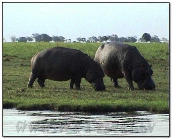 Botswana Chobe 017