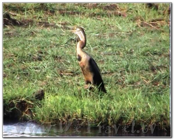 Botswana Chobe 019