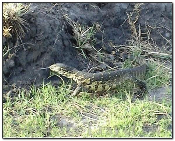 Botswana Chobe 022