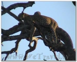 Botswana Chobe 034