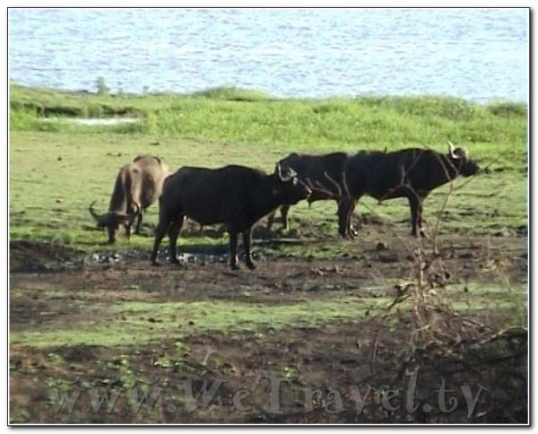 Botswana Chobe 036