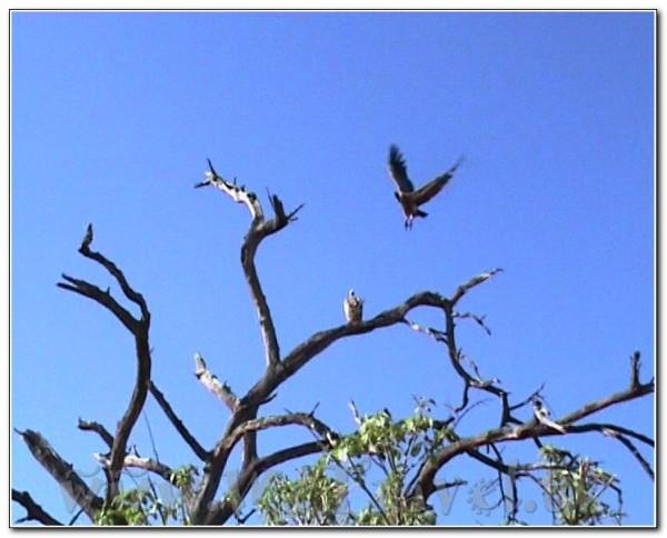 Botswana Chobe 041