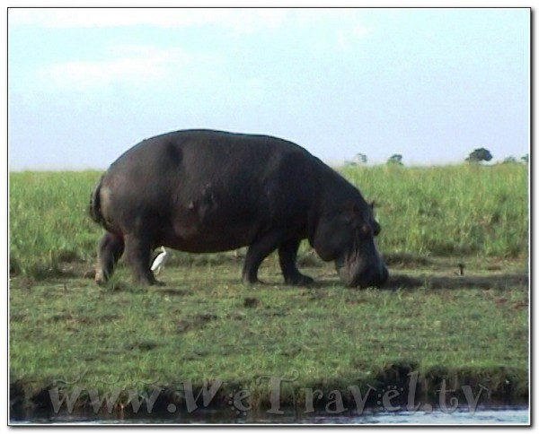 Botswana Chobe park