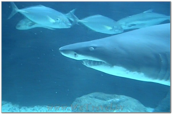 Capetown Aquarium 3