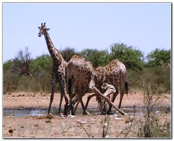Namibia Etosha 010