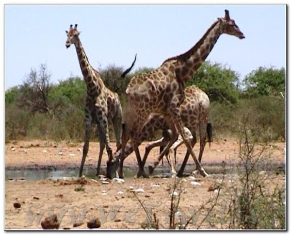Namibia Etosha 011