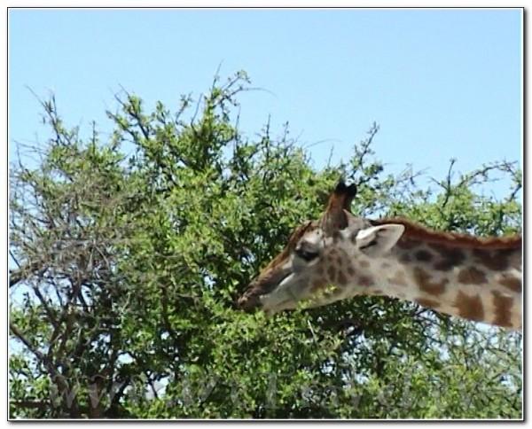 Namibia Etosha 016