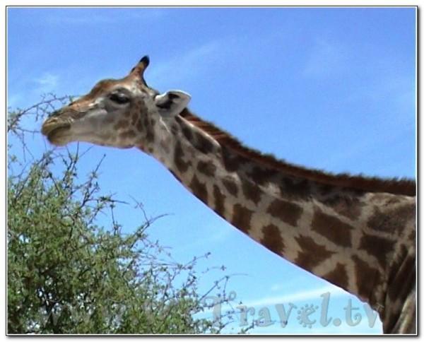 Namibia Etosha 018