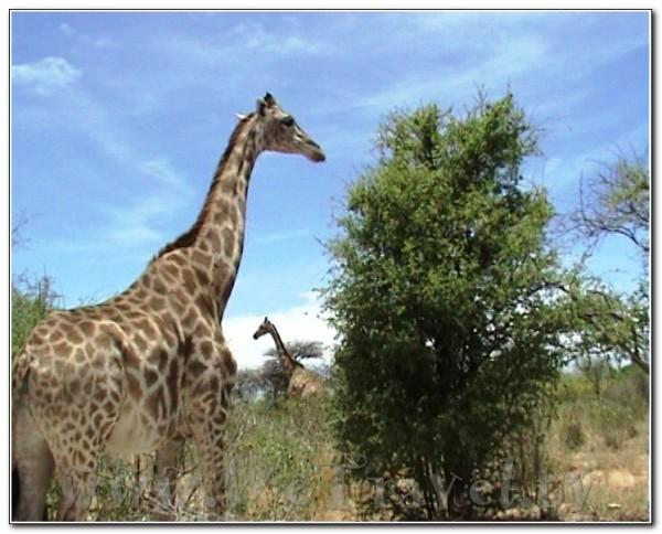 Namibia Etosha 019