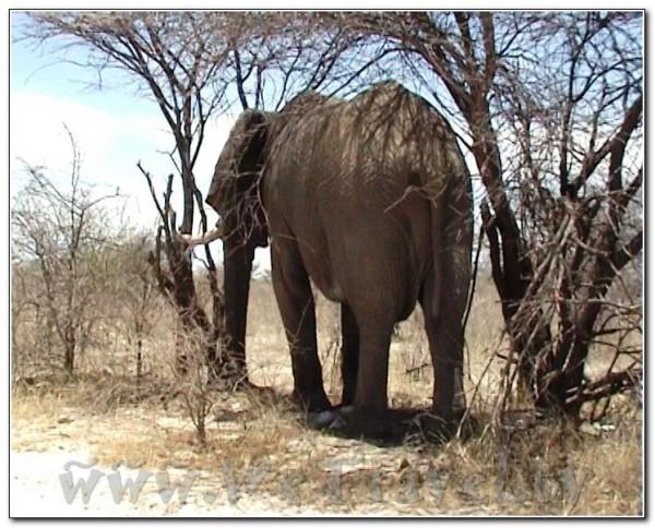 Namibia Etosha 020
