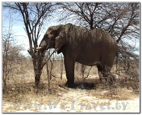 Namibia Etosha 022