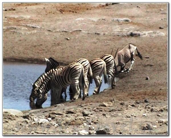 Namibia Etosha 026