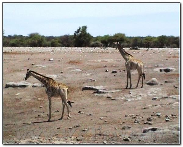 Namibia Etosha 029