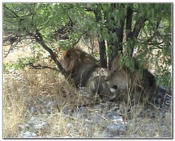 Namibia Etosha 037