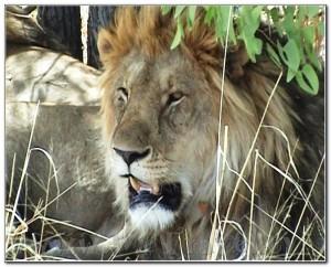 Namibia Etosha 039