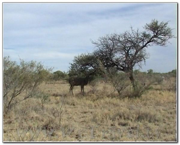 Namibia Etosha 048