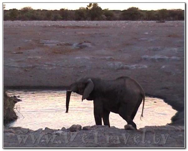 Namibia Etosha 054