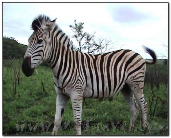 Republic of South Africa Hlu Hluwe 007