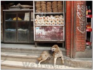 Bhaktapur. Nepal. 008