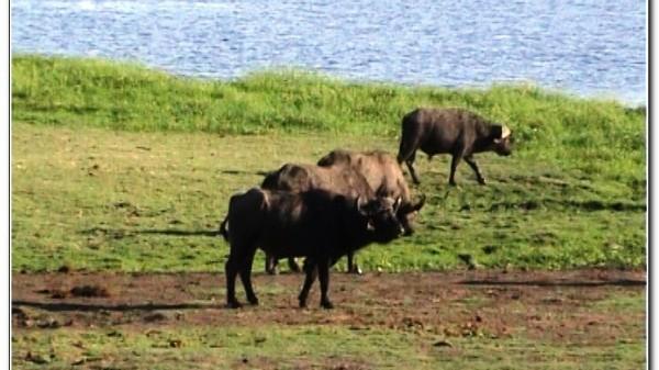 Botswana Chobe 037
