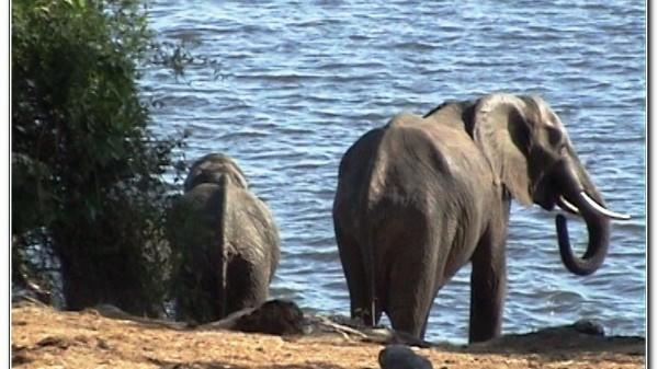 Botswana Chobe 046