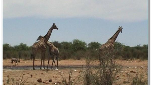 Namibia Etosha 007