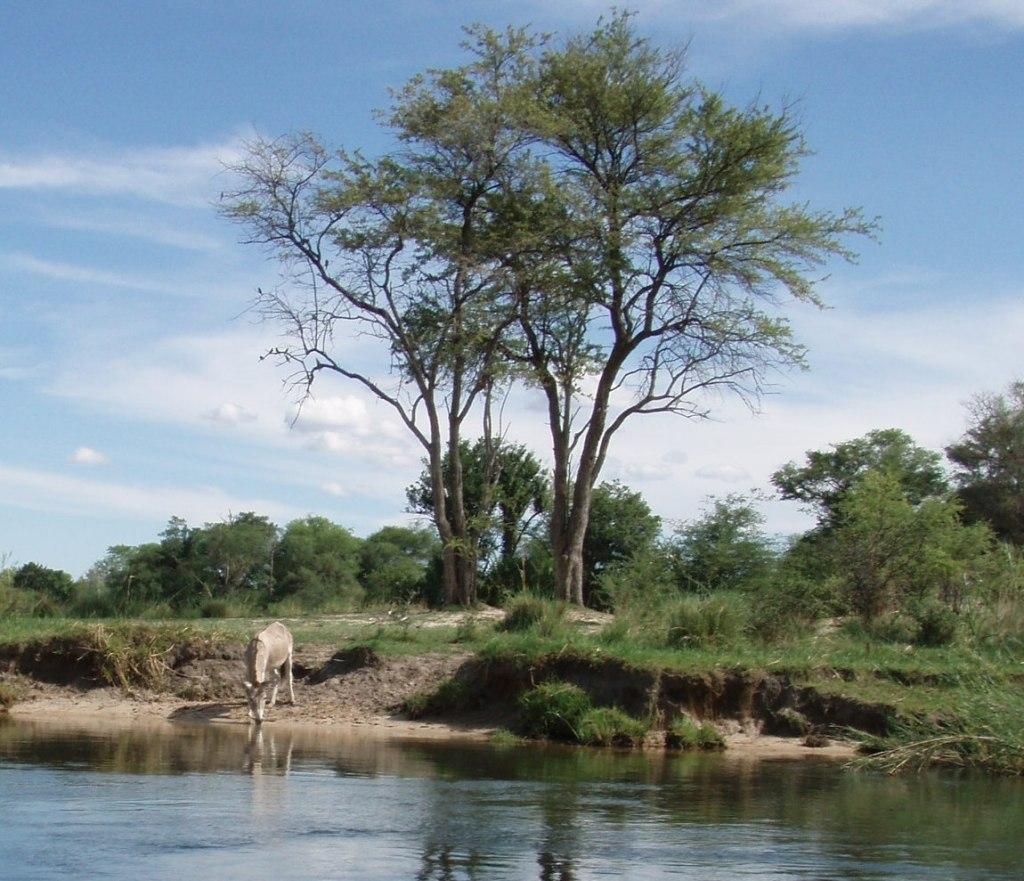 Самостоятельно по Африке путешествуют герои и отморозки